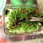 Seaweed Salad - Scissor MicroGreens